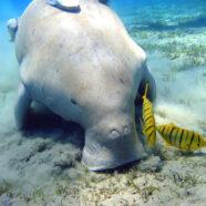 Mergulho na Indonésia