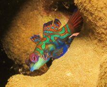 Mergulho em Palau