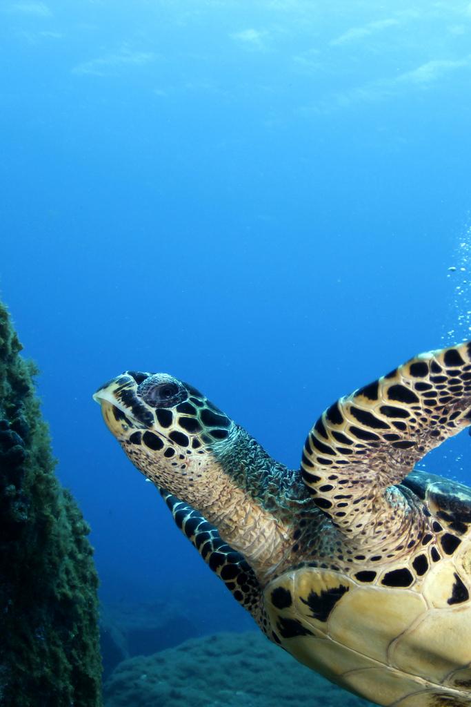 tartaruga fernando de noronha